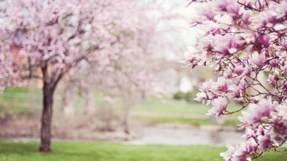 virtual tour of botanical gardens