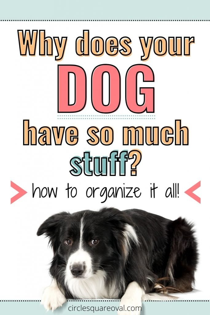 border collie, how to organize dog supplies