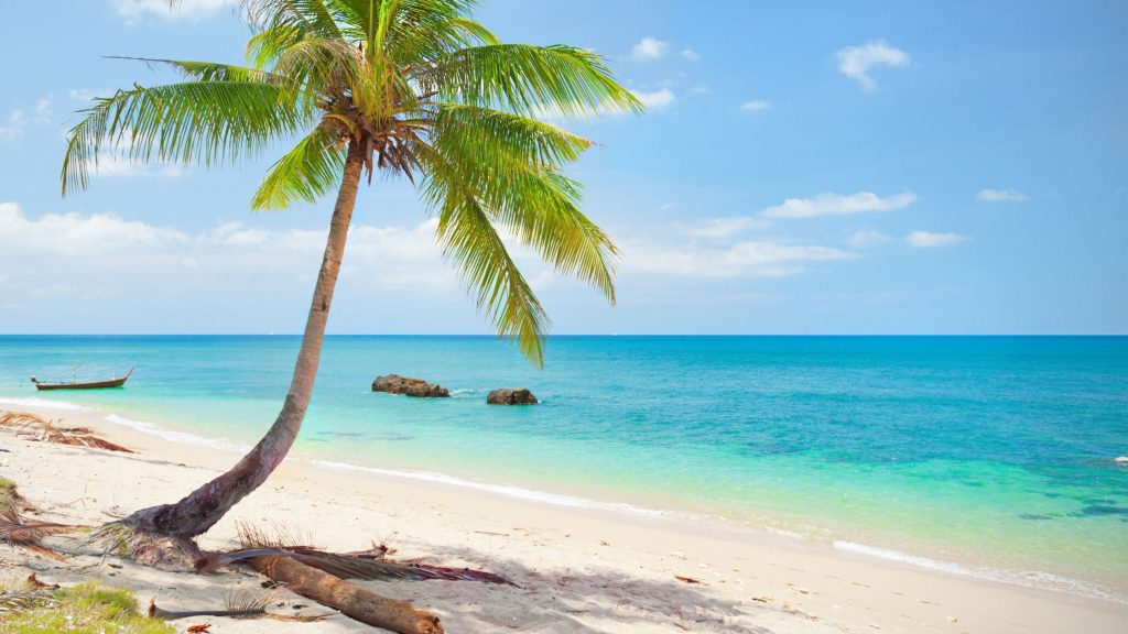 tropical beach with palm tree and blue water
