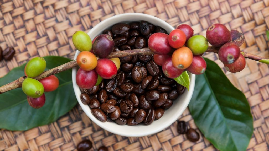 coffee cup filled with both roasted and freshly picked coffee beans