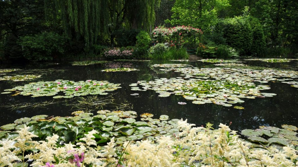 lily pond in Monet's garden