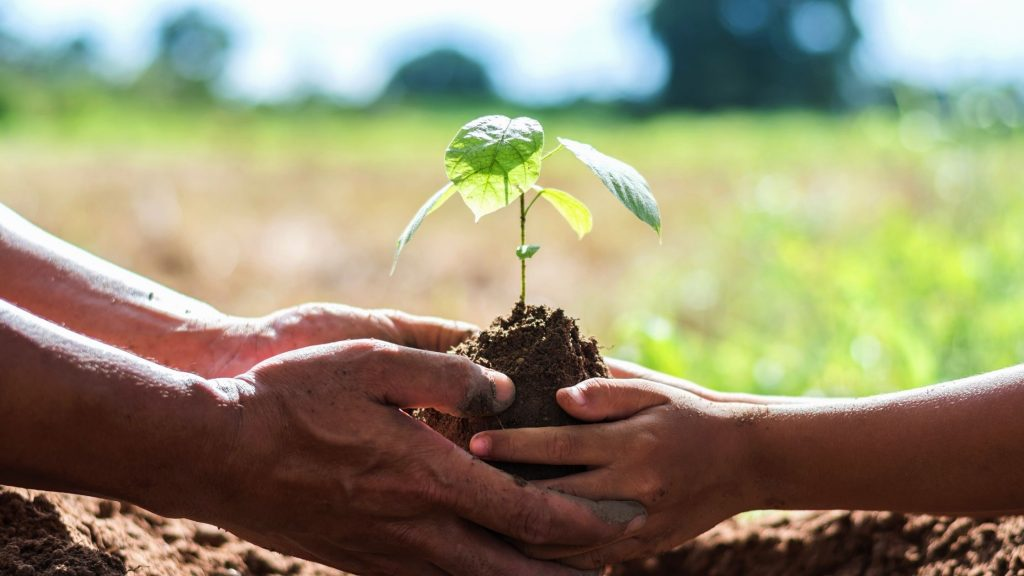 adult and child hands together holding plant, ready to put it in the ground as an act of kindness to the world