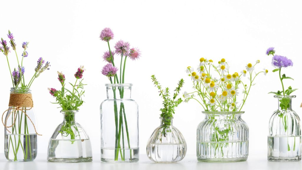 herbs and plants to make essential oils